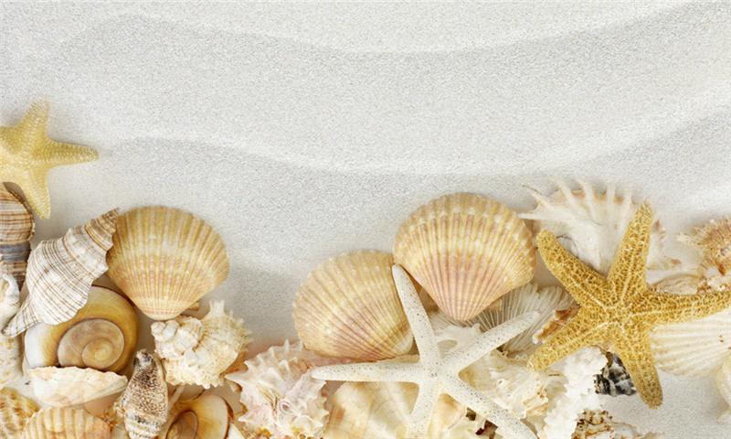 这是贝壳图片