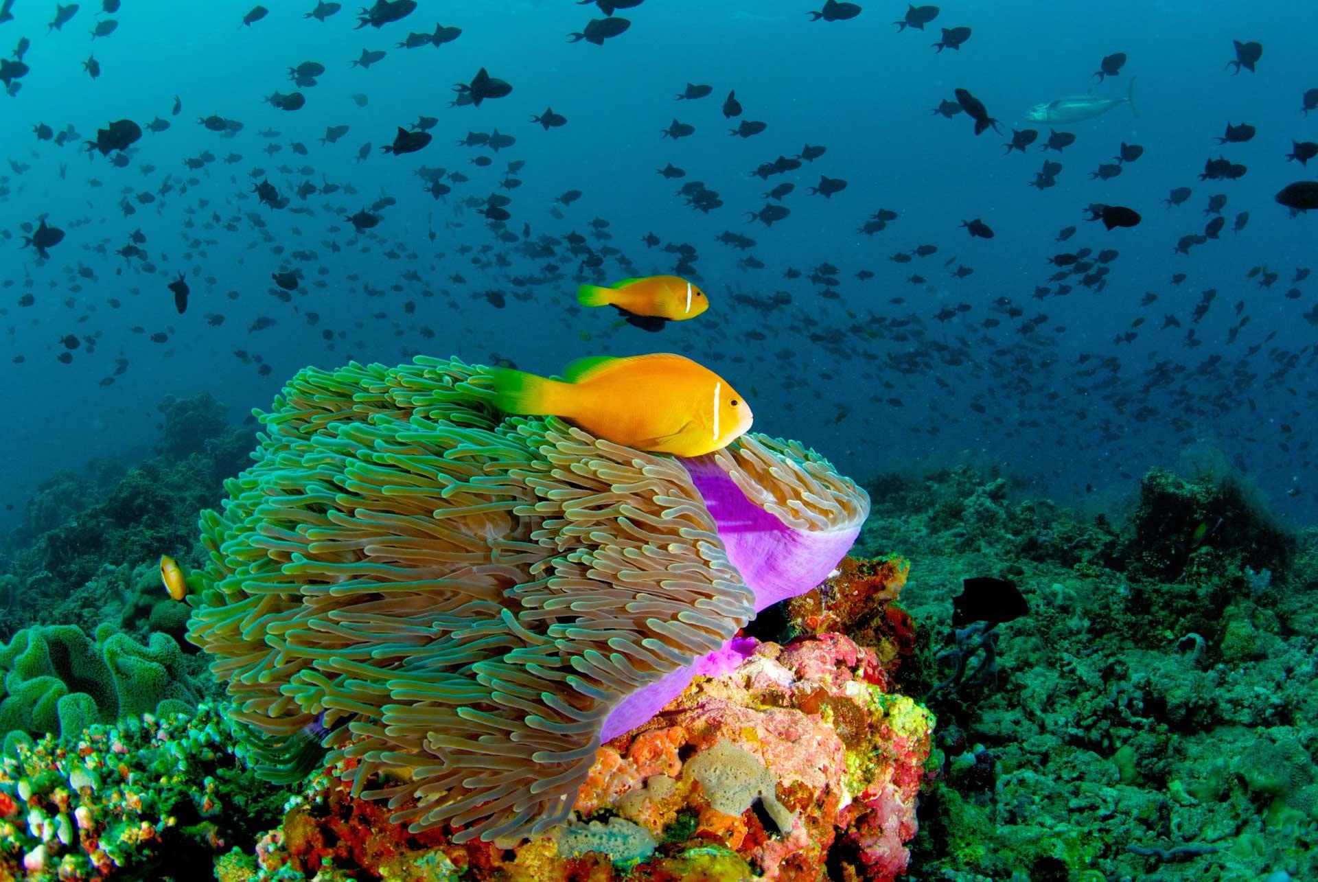 了解下该如何清洗生态鱼缸