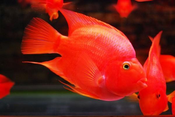 哪些是清理鱼缸的正确做法呢