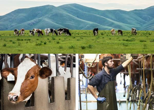溯源畜牧稱重管理系統
