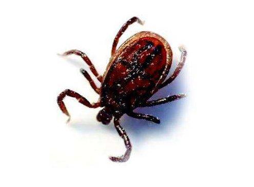 恙蟲的危害及防制