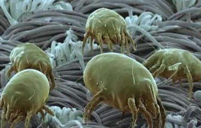 螨蟲的危害及防制