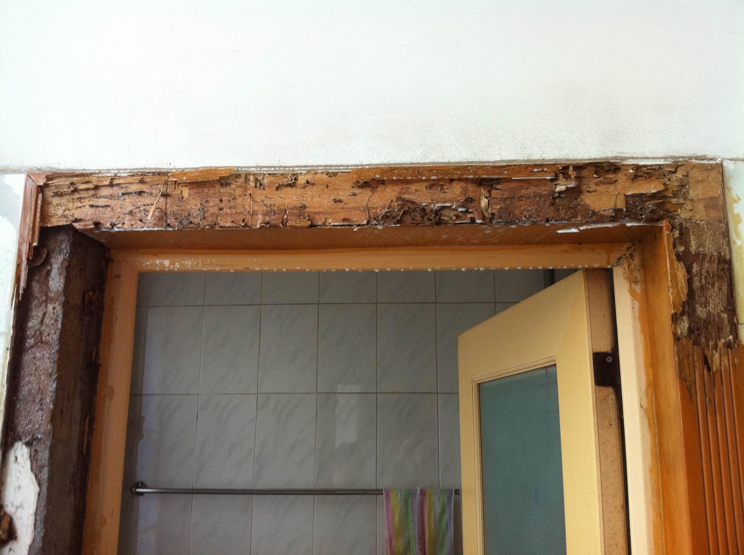 一業主購買樣板房 4年便遭白蟻危害